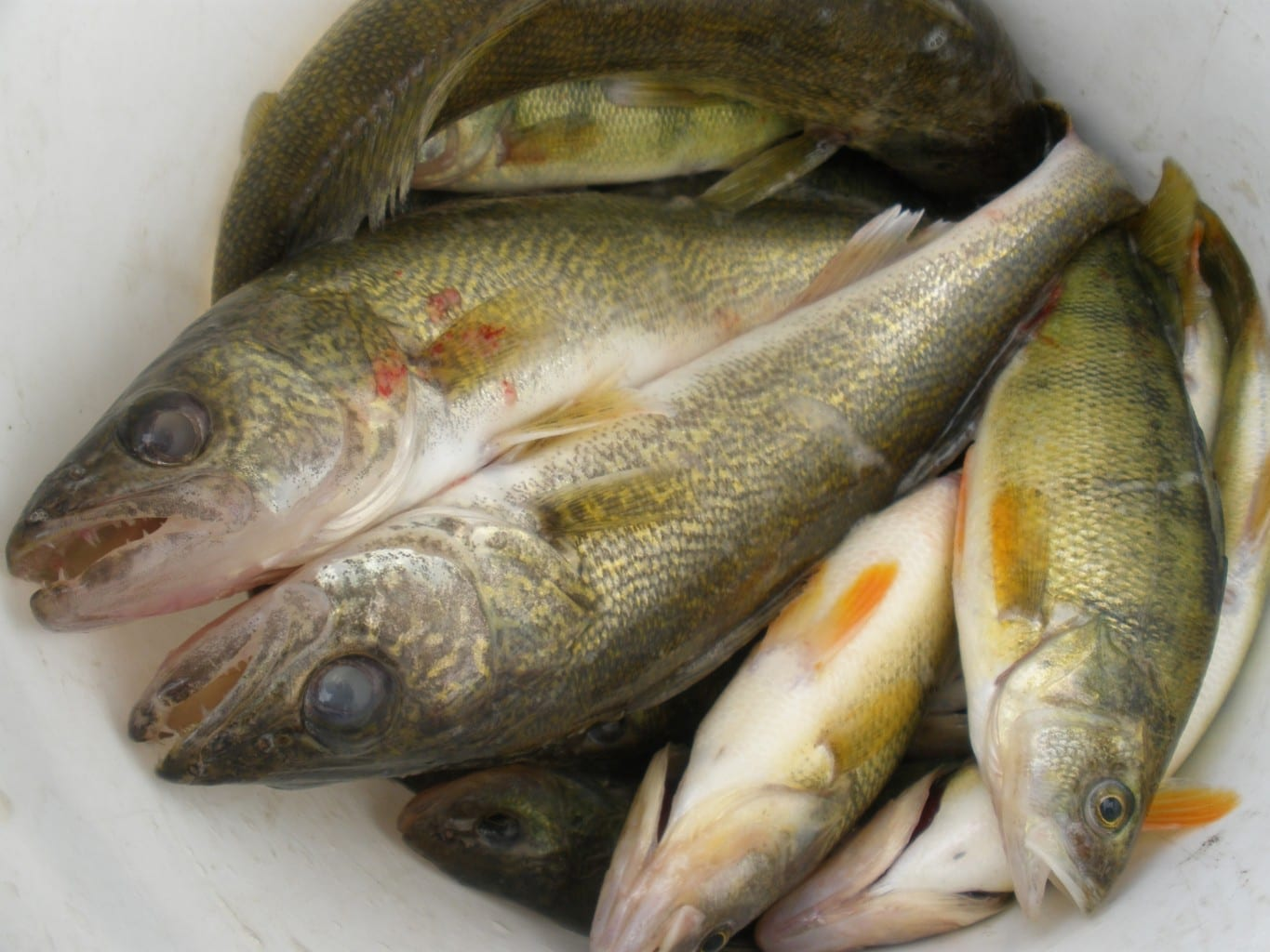 Lake Winnebago Fishing Report 7.15.19