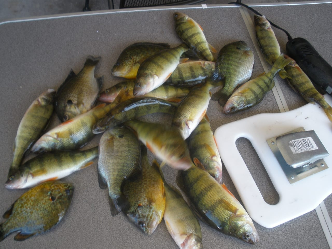 Attracting Perch – Tips and Tricks of the Old Timers