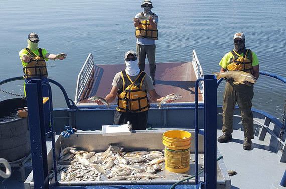 Update On The Lake Winnebago Trawling Report And Winnebago Walleye Survey Efforts
